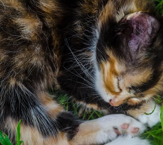 Schöne nette schwarze und rote katze, die auf dem gras schläft.