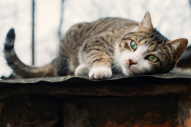 Schöne obdachlose katze auf dem dach eines alten zerstörten hauses. das konzept des schutzes und der unterstützung von tieren.