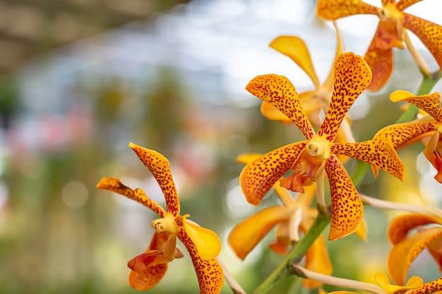 Schöne orange orchidee und gemusterte braune stellen hintergrund verwischten blätter in einem sommergarten.