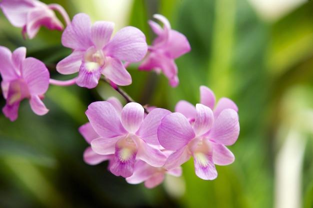 Schöne orchidee auf grünem hintergrund