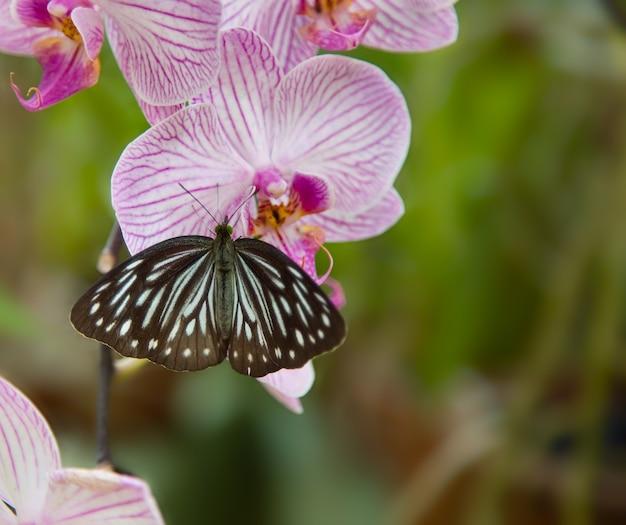 Schöne orchidee mit schmetterling