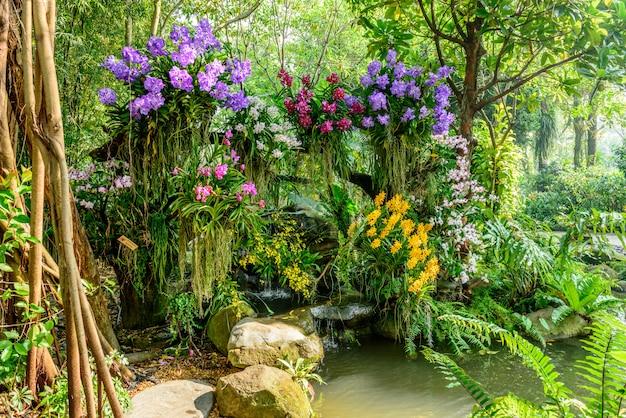 Schöne orchidee vom garten