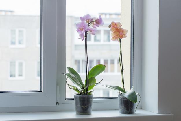 Schöne orchideen auf der fensterbank