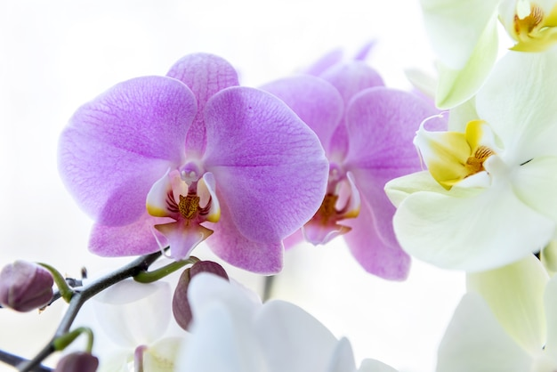 Schöne orchideenblüte auf grünem brunch hautnah