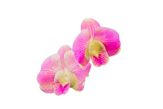 Schöne orchideenblume auf weißem hintergrund