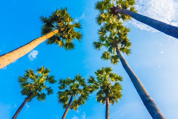Schöne palme am blauen himmel