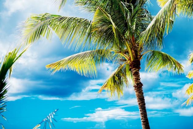Schöne palme auf einer paradiesischen insel mit klarem blauem himmel