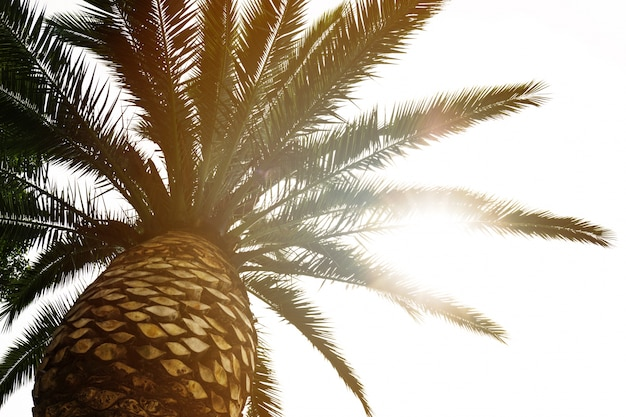 Schöne palme mit lichtstrahl sonniger tag. toning urlaubskonzept. ansicht von unten. defokussiert verschwommen.