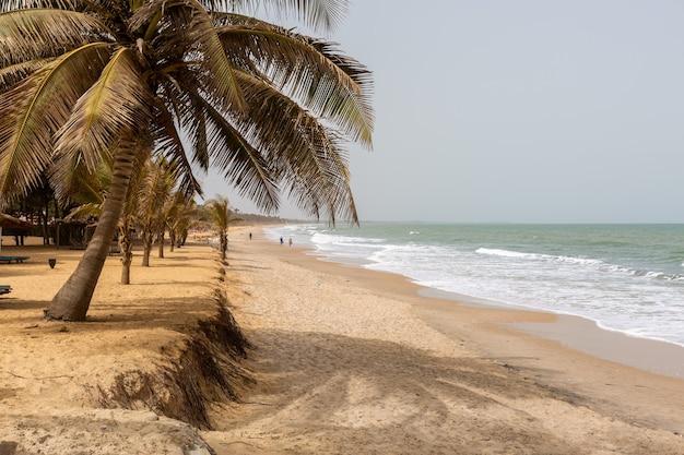 Schöne palmen am strand durch das gewellte meer gefangen in gambia, afrika