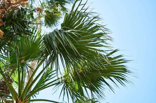 Schöne palmen auf der tropischen insel