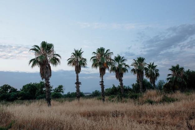 Schöne palmen des truthahns im reisekonzept des sonnenunterganghimmels und in den touristischen zielen