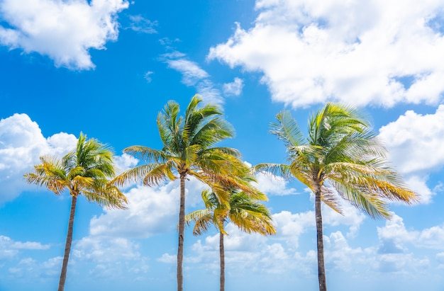 Schöne palmen im hintergrund des blauen himmels