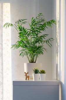 Schöne palmenchamaedorea im blumentopf auf regal in der wohnung