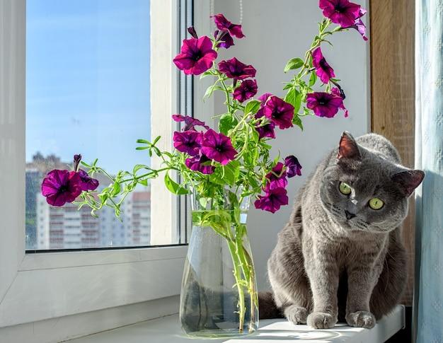 Schöne petunienblumen und eine süße graue katze auf der fensterbank. sommerstimmung.