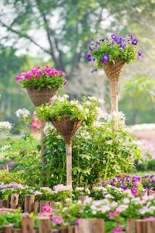 Schöne petunienblumen