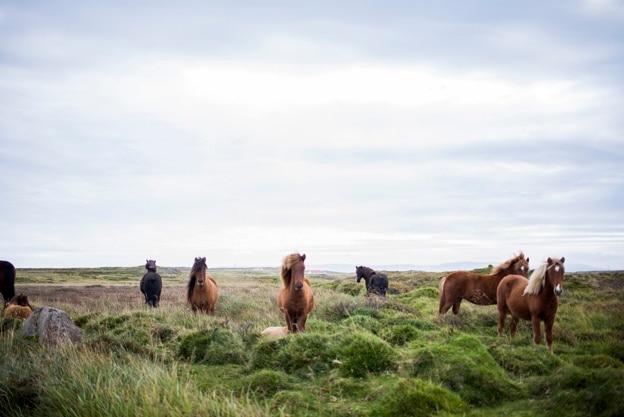 Schöne pferde in freier wildbahn