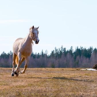 Schöne pferdeläufe