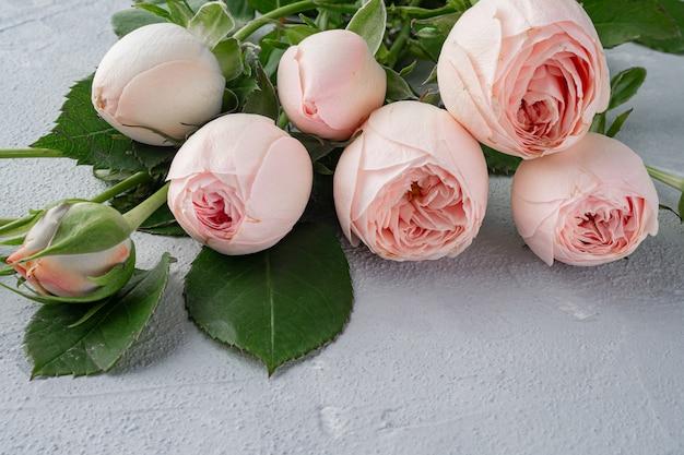 Schöne pfingstrosenförmige buschige rosa rosen. valentinstag, das konzept der liebe und loyalität. kopieren sie platz.