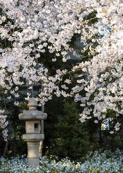 Schöne pfirsichbaumblüte in tokio