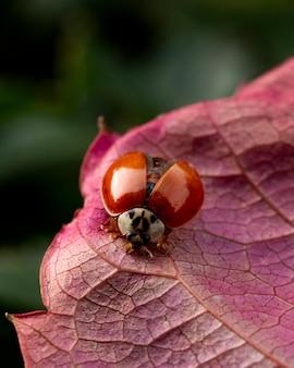 Schöne pflanze mit kleinem käfer