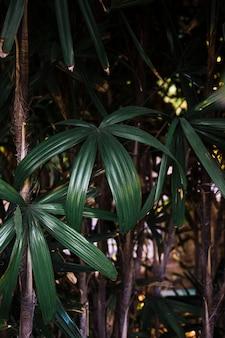 Schöne pflanzen im dschungel wachsen