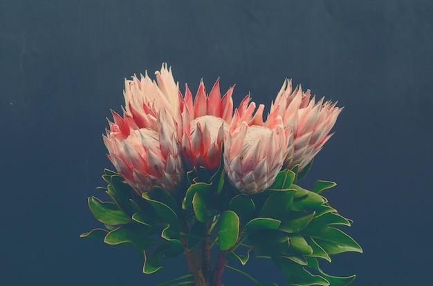 Schöne proteablume für hintergrund