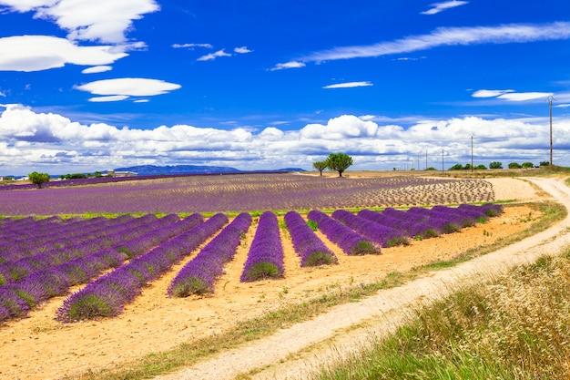 Schöne provence mit blühenden lavendelfeldern. frankreich, va.ensole,