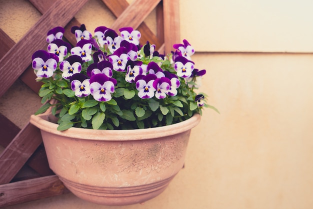 Schöne purpurrote blume (gefiltertes bild verarbeitet jahrgang effec