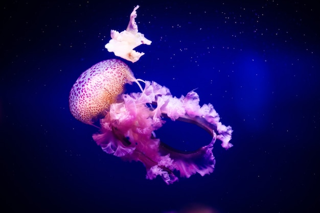 Schöne qualle, medusa im neonlicht mit den fischen.