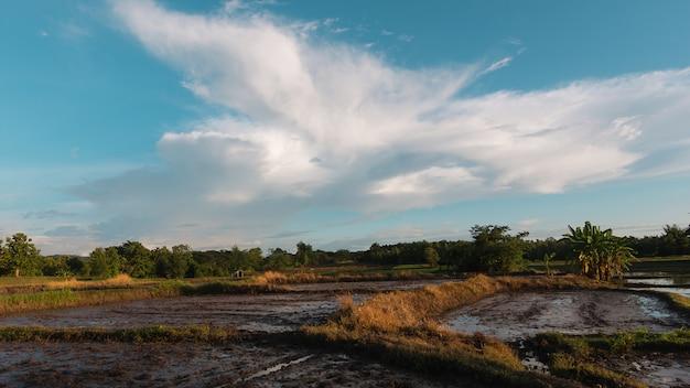 Schöne reisfeldansicht hat eine nette wolke in nordthailand vor dem reispflanzen