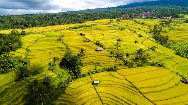 Schöne reisfelder in bali. berühmt für die reisfelder in asien.