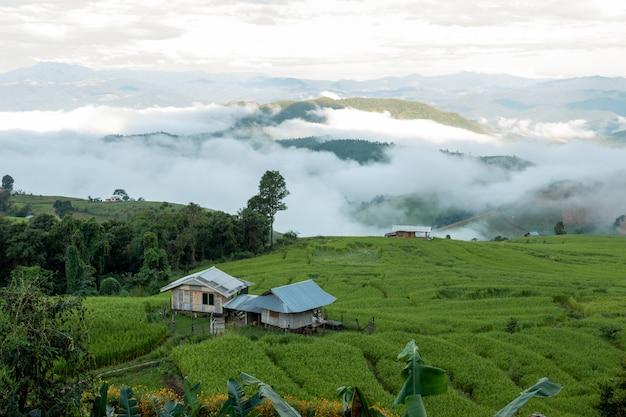 Schöne reisterrassen morgens bei chiang mai, thailand