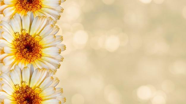 Schöne ringelblumenblumen auf gelbem unscharfem hintergrund. festliches blumenkonzept. blumenkarte mit blumen, kopienraum.