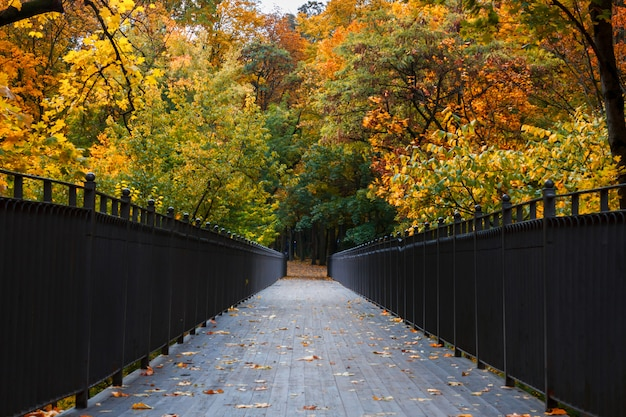 Schöne romantische gasse in einem park mit bunten bäumen