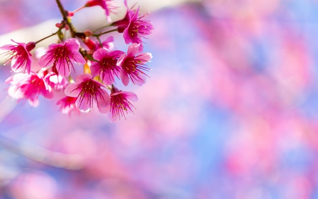 Schöne rosa blume blühen
