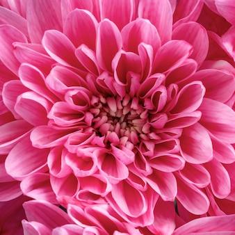 Schöne rosa blume der nahaufnahme