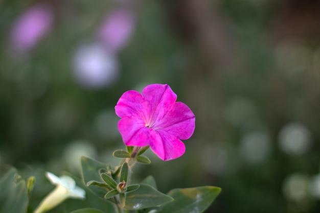 Schöne rosa blume mit unscharfem hintergrund