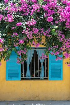 Schöne rosa blumen und ein fenster mit blauen fensterläden auf einer gelben alten wand auf der straße in hoi an altstadt, vietnam, nah oben