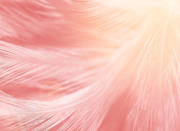 Schöne rosa farben tonen feder mit orange hellem beschaffenheitshintergrund