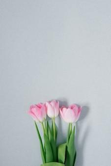 Schöne rosa frühlingstulpen auf hellblauem hintergrund, flach liegend. eine kopie des raumes. karte für den urlaub