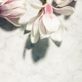 Schöne rosa magnolienblumen auf weißem marmortisch. draufsicht. flach liegen. frühling minimales konzept.
