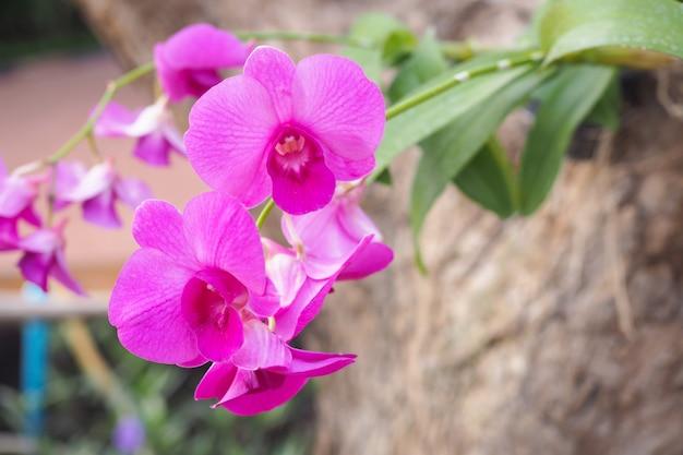 Schöne rosa orchideenblume im garten am winter- oder frühlingstag mit unscharfem hintergrund