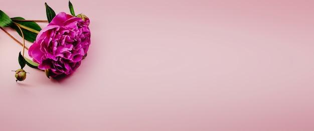 Schöne rosa pfingstrosenblumen auf rosa pastellhintergrund mit kopienraum