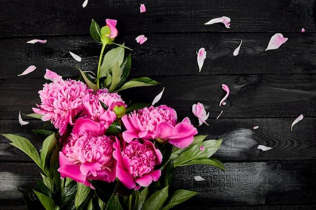 Schöne rosa pfingstrosenblumen, draufsicht