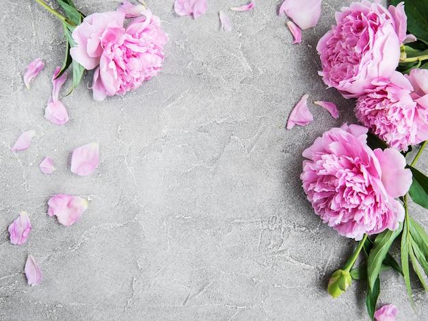 Schöne rosa pfingstrosenblumen