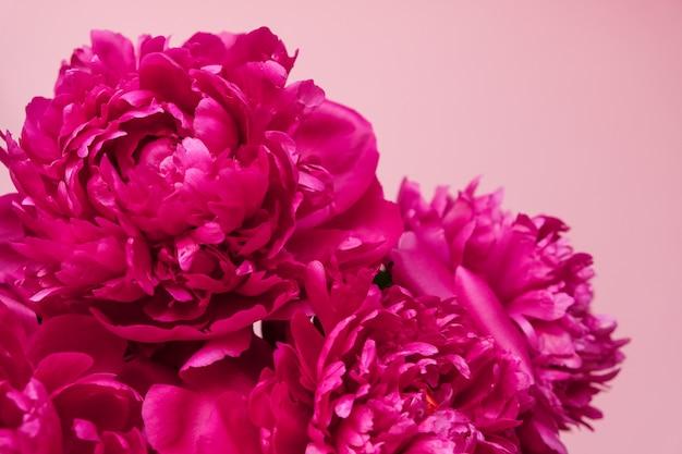 Schöne rosa pfingstrosenblumenstraußnahaufnahme auf rosa. ansicht von oben. flach liegen