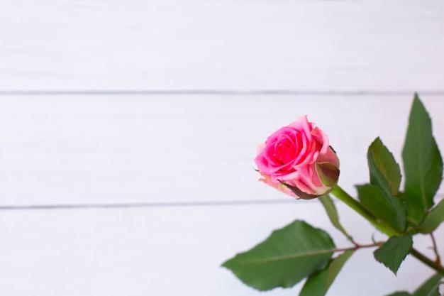 Schöne rosa rose auf weißem hölzernem hintergrund