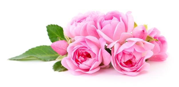 Schöne rosa rosen auf einem weiß
