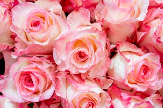 Schöne rosa rosen für hochzeit und verlobung.