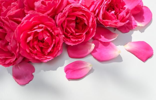 Schöne rosa rosen und blütenblätter auf weißem hintergrund ideal für grußkarten zum hochzeitsgeburtstag